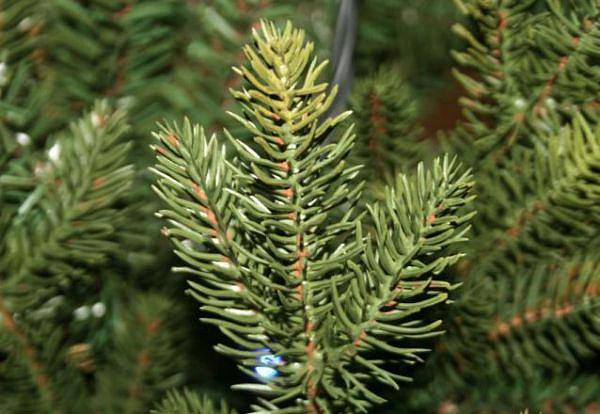 Как выбрать искусственную елку